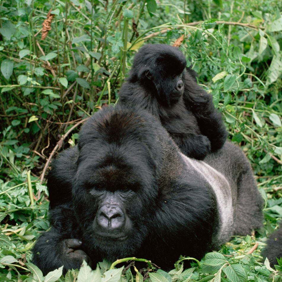 Diez momentos enternecedores entre padres animales y sus crías