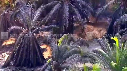 Un vertido de petróleo en Colombia mata a 2.400 animales