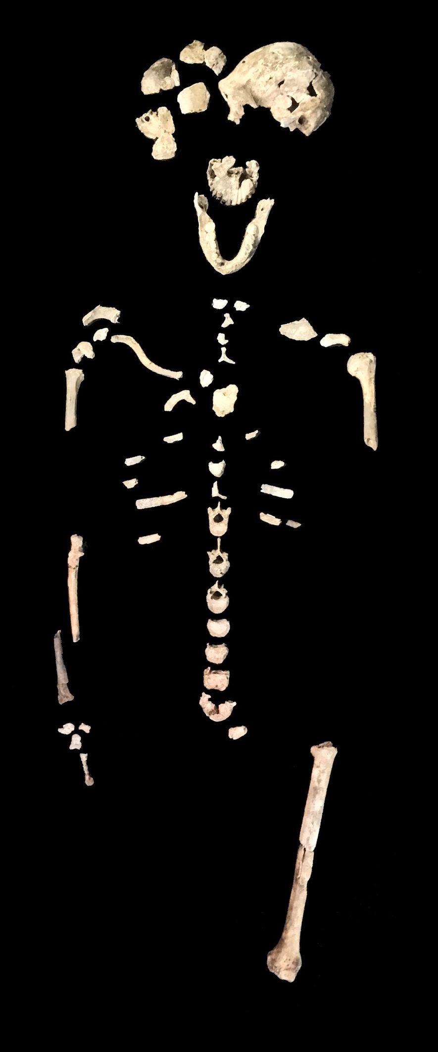 Huesos Homo naledi
