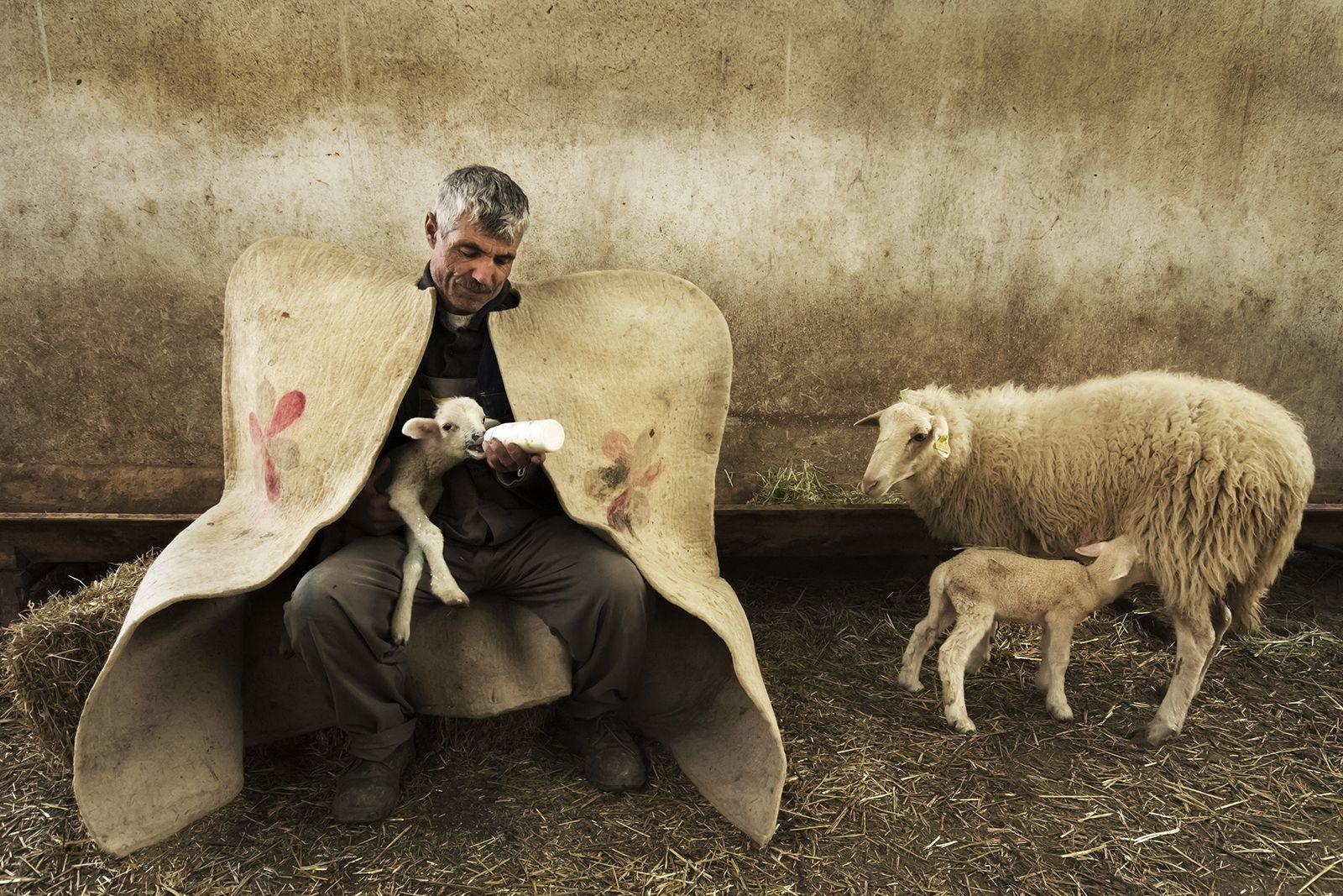 El pastor y el cordero