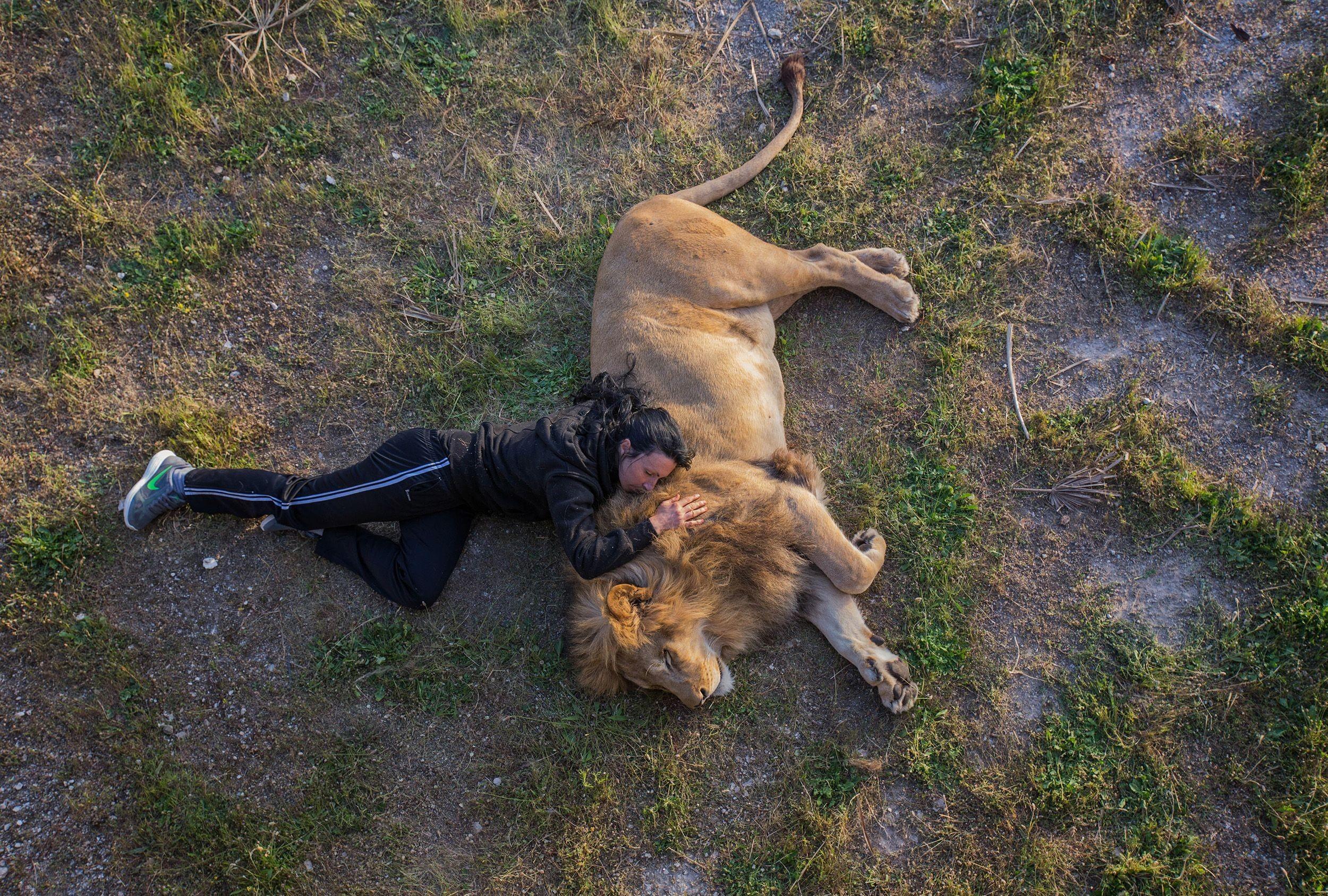 Siesta con el león