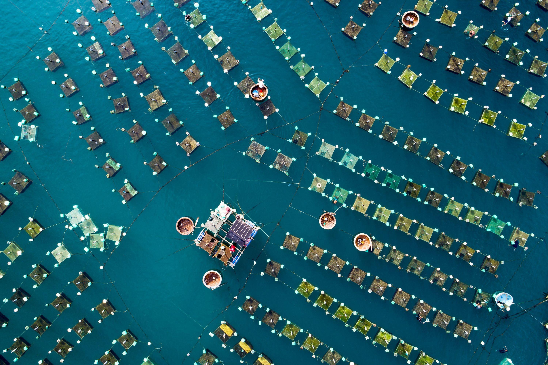 Mar de jaulas