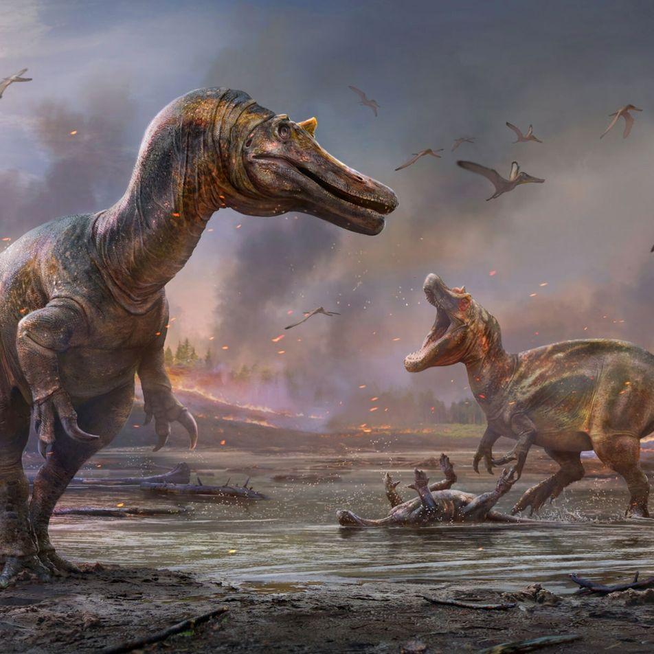 Una nueva 'garza del infierno' prehistórica da más pistas sobre los orígenes del Spinosaurus