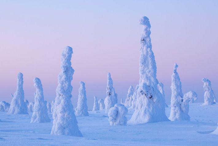 Imagen de unos árboles cubiertos de nieve en el Parque Nacional de Riisinturi, Finlandia.