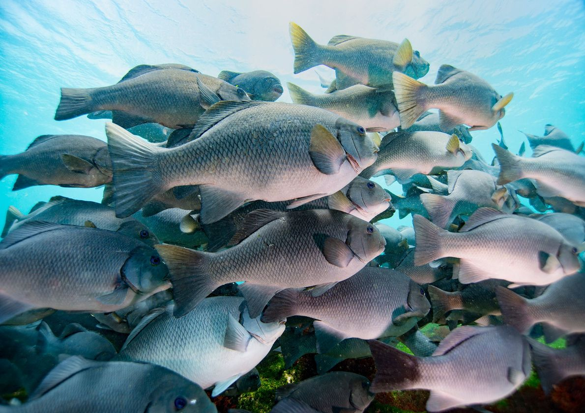 «Me encontré con un banco de peces de preciosos ojos azules en las Galápagos».