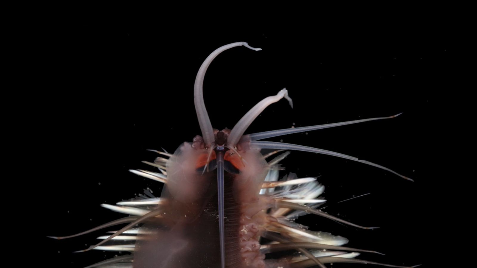 Descubren treinta especies submarinas