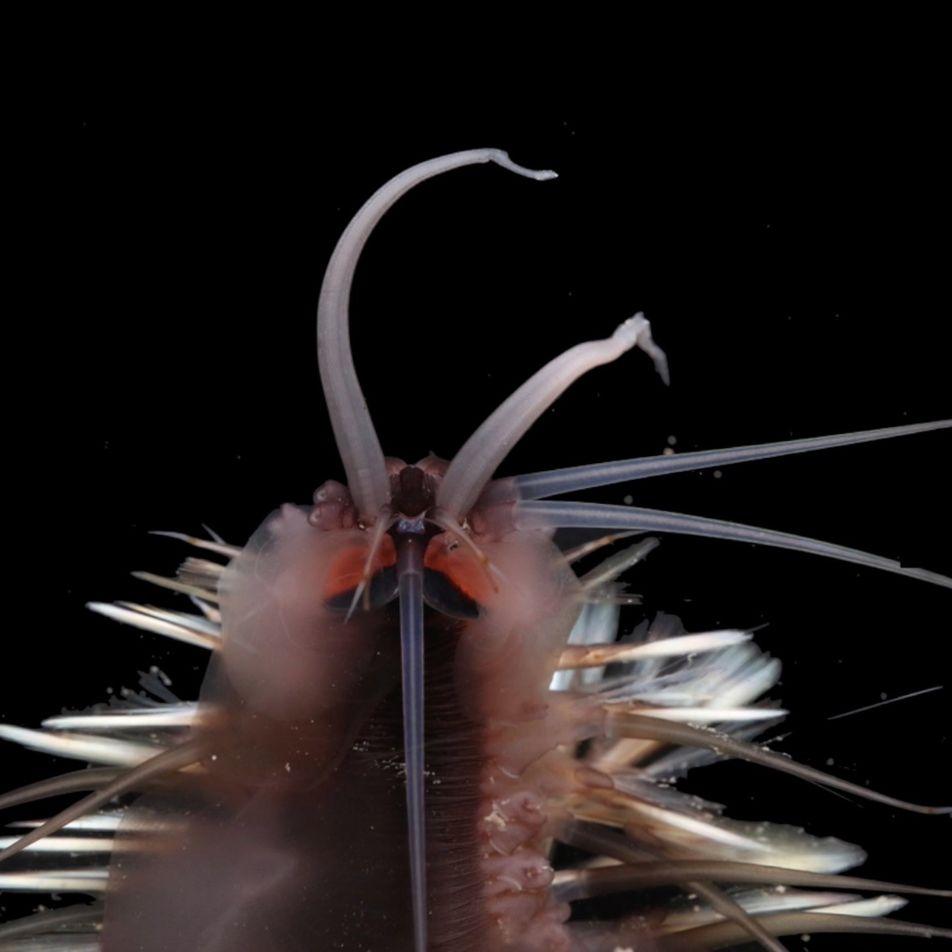 Descubren treinta nuevas especies submarinas en las inexploradas aguas del arrecife del Ningaloo