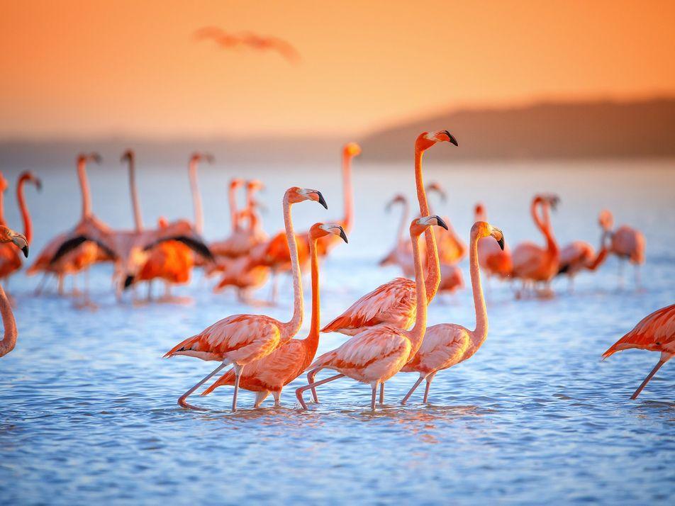 22 paisajes llenos de fauna que vale la pena visitar