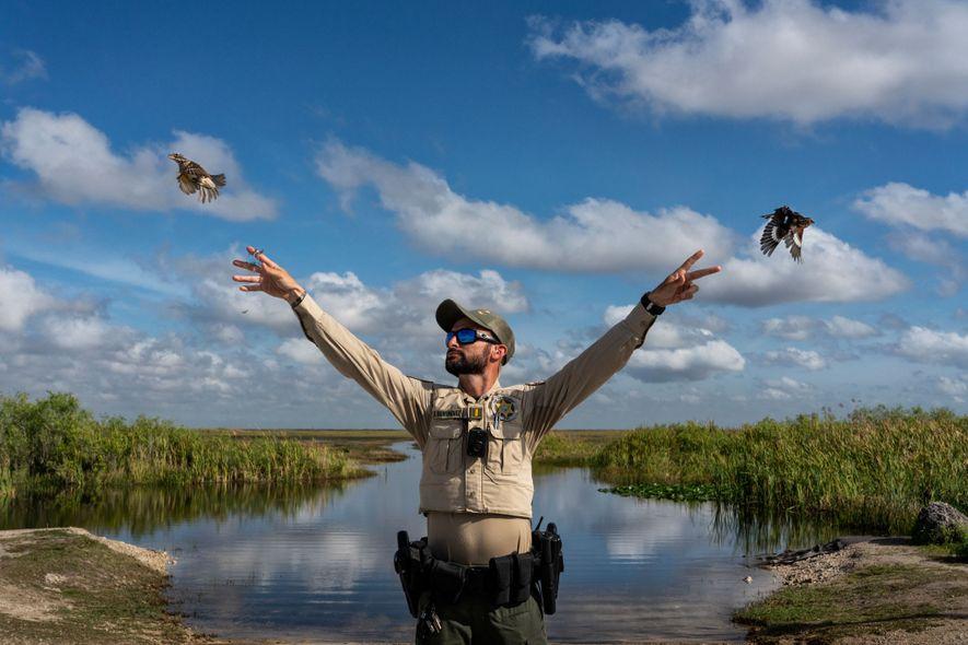 Aves cantoras liberadas