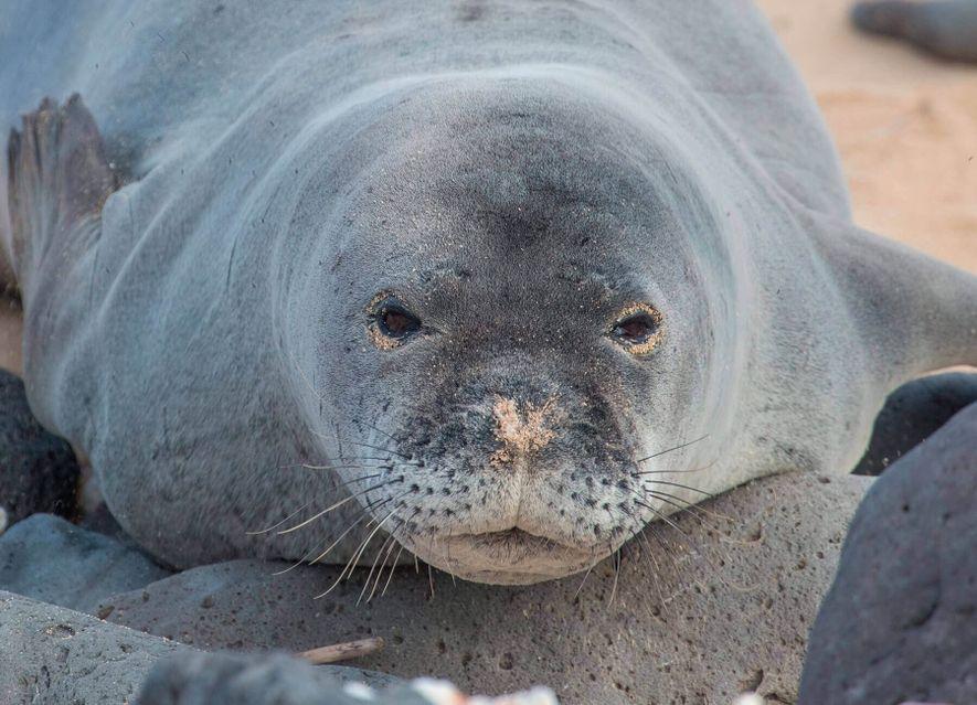 Cinco especies que podrían desaparecer muy pronto del Mediterráneo