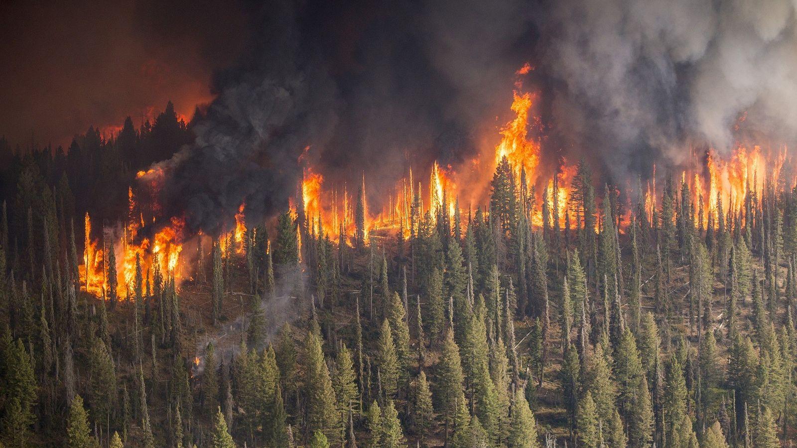 La cifra de incendios de más de 500 hectáreas se ha visto también reducido de los ...