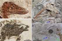Fósiles de dinosaurios
