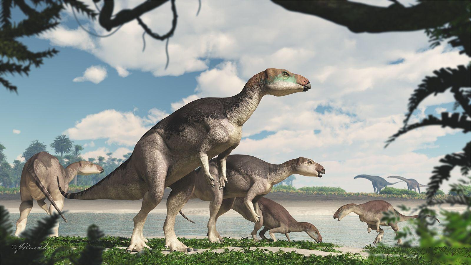 Estos Fosiles Hallados En Opalo Pertenecen A Una Nueva Especie De Dinosaurio National Geographic Dinosaurios emplumados y la conexión con las aves. estos fosiles hallados en opalo