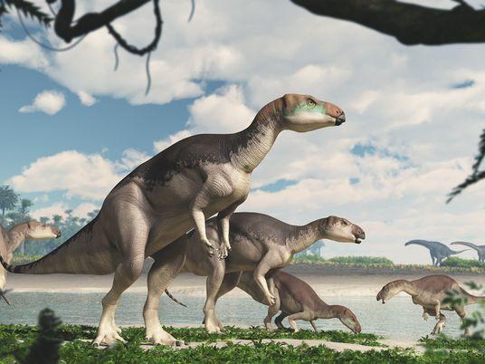 Estos fósiles hallados en ópalo pertenecen a una nueva especie de dinosaurio