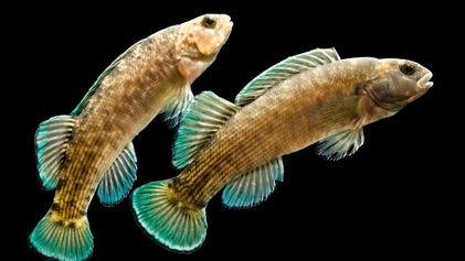 La diversidad de los peces de agua dulce