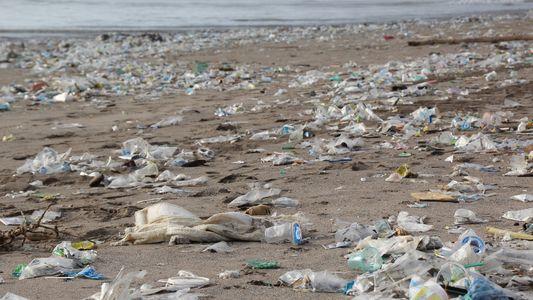 Trashtag challenge, el desafío por cuidar el planeta se hace viral