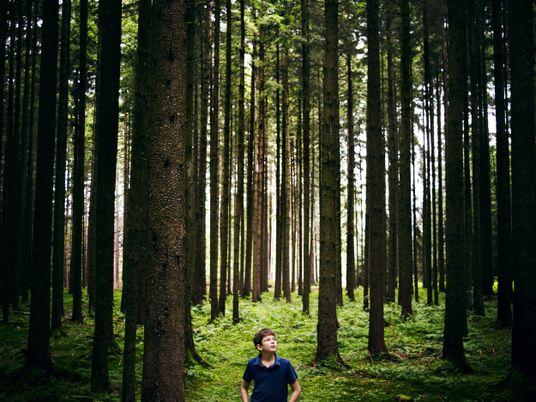 Cinco historias de personas que utilizaron árboles para cambiar el mundo
