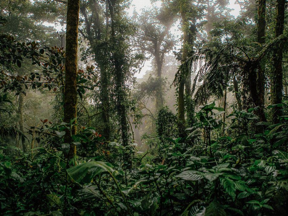 Esta localidad de Costa Rica se enfrenta a una crisis de ecoturismo