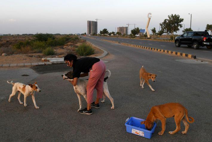 Imagen de Noor Ali alimentando a un grupo de perros abandonados en Pakistán