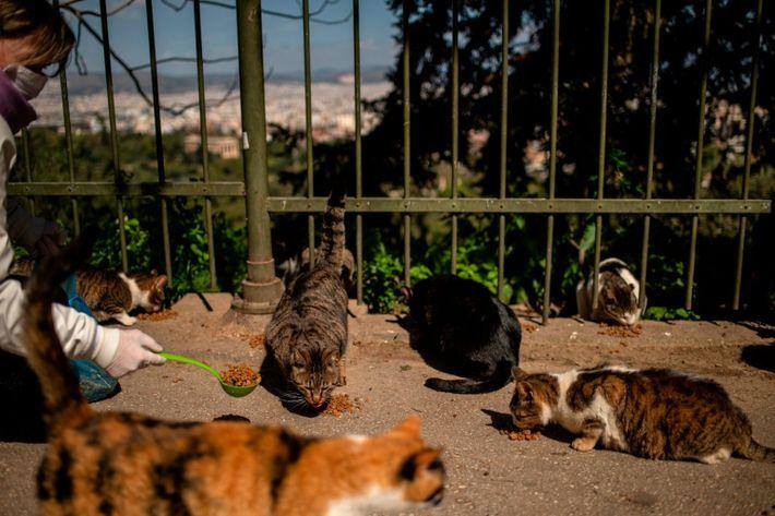 Imagen de Eleni Kefalopoulou repartiendo pienso a los gatos callejeros en Atenas