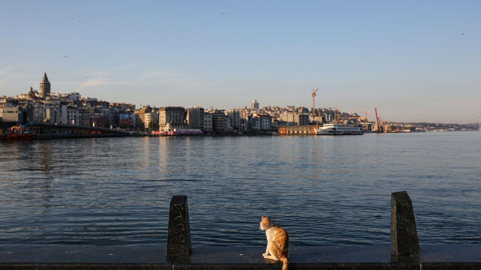 Imagen de un gato callejero en Eminönü