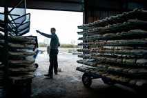 Fotografía de una granja peletera en Dinamarca