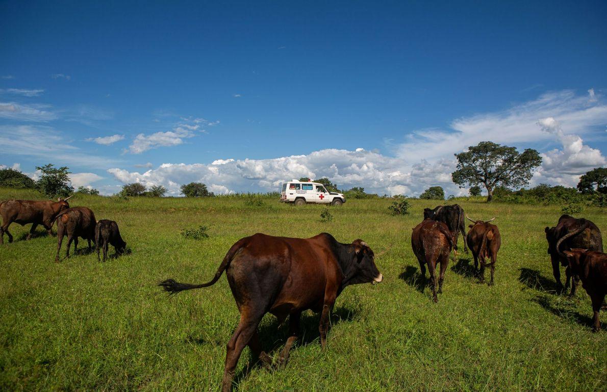 Distribución de vacunas en Zimbabue