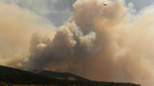 El ciclo 'terrorífico' que podrían estar provocando los incendios forestales