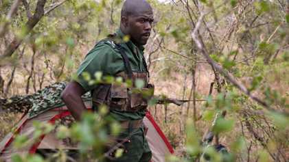 Cómo los protectores de rinocerontes en Sudáfrica se han convertido en una amenaza para la especie