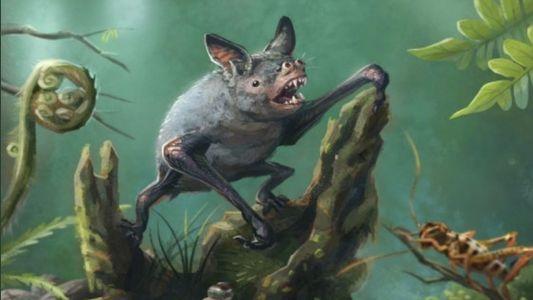 Hallados en Nueva Zelanda los fósiles de un murciélago excavador gigante extinto