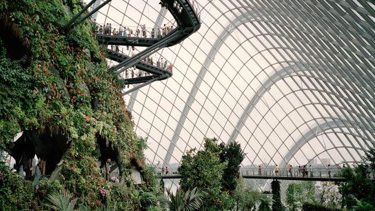 Imagen de pasarelas en la biosfera