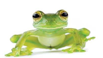 ¿Quieres visitar Costa Rica? Así puedes ayudar a proteger a sus ranas