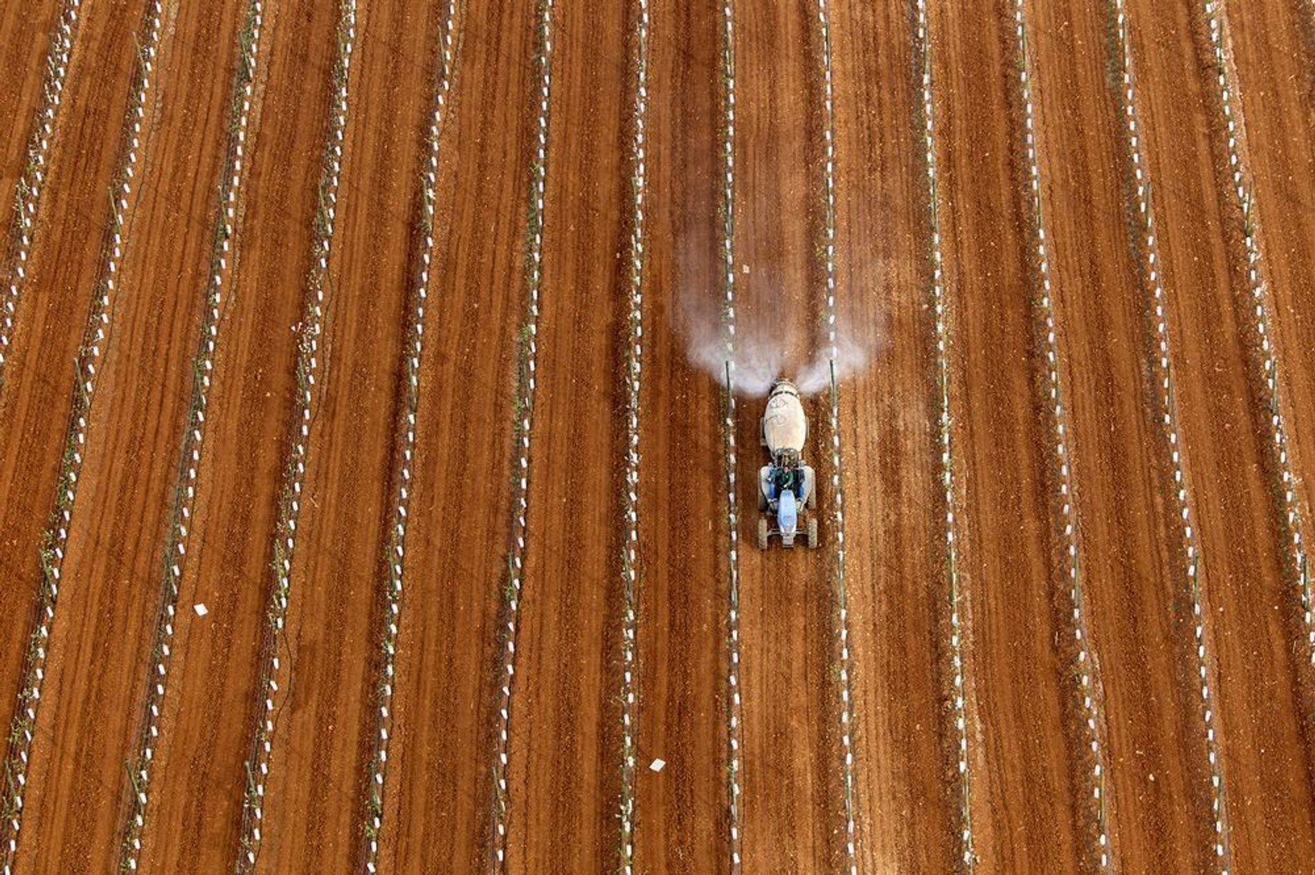 Agricultura en Mallorca