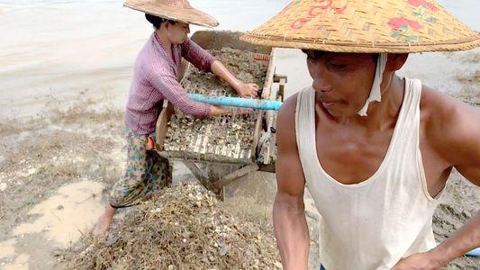 La búsqueda de partículas de oro en las selvas del Sudeste Asiático
