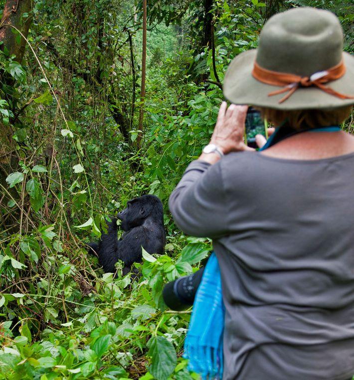 Una turista fotografía a un gorila