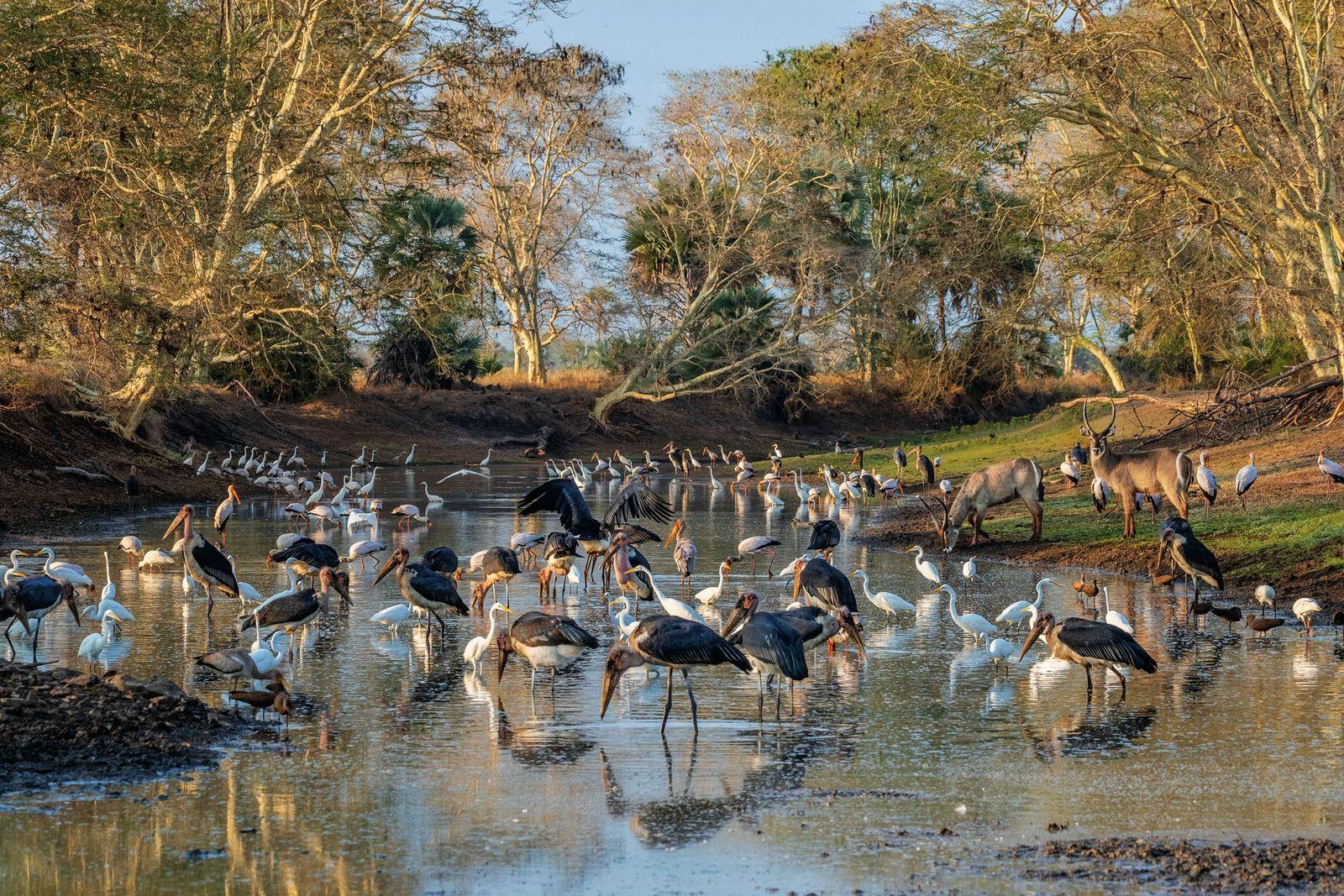 Aves de Gorongosa