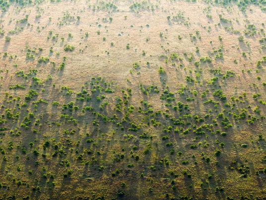 La Gran Muralla Verde africana que protegerá el Sahel de la desertificación