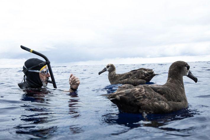 Lecomte con dos albatros
