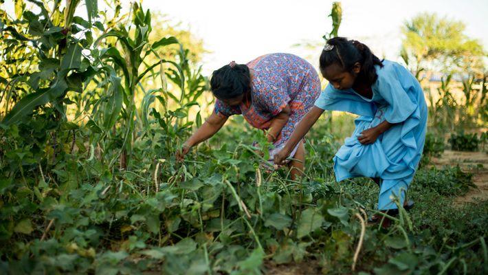 Una mujer y una niña cuidan de los frijoles guajiros