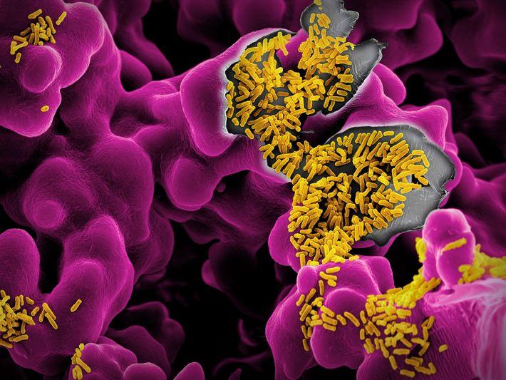 Imagen de la Escherichia coli