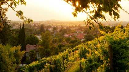 Esta región poco conocida podría tener los mejores vinos de Italia
