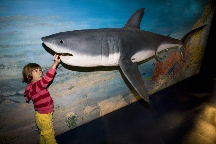 Una niña toca la escultura de un tiburón