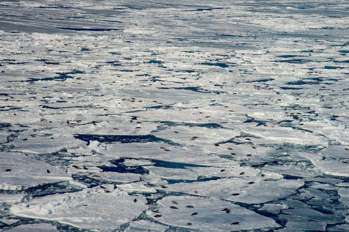 Discos de hielo