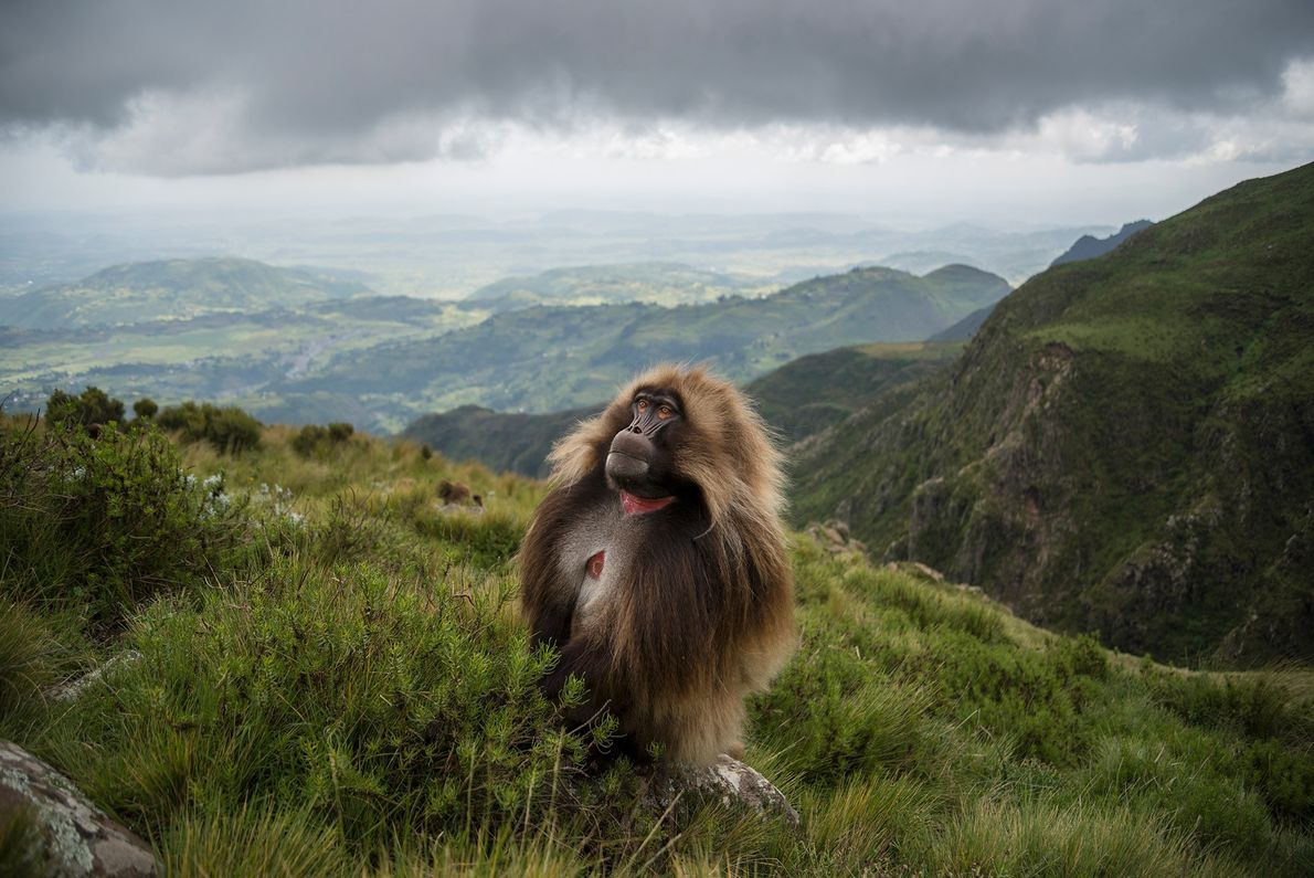 Área de conservación comunitaria de Guassa, Etiopía