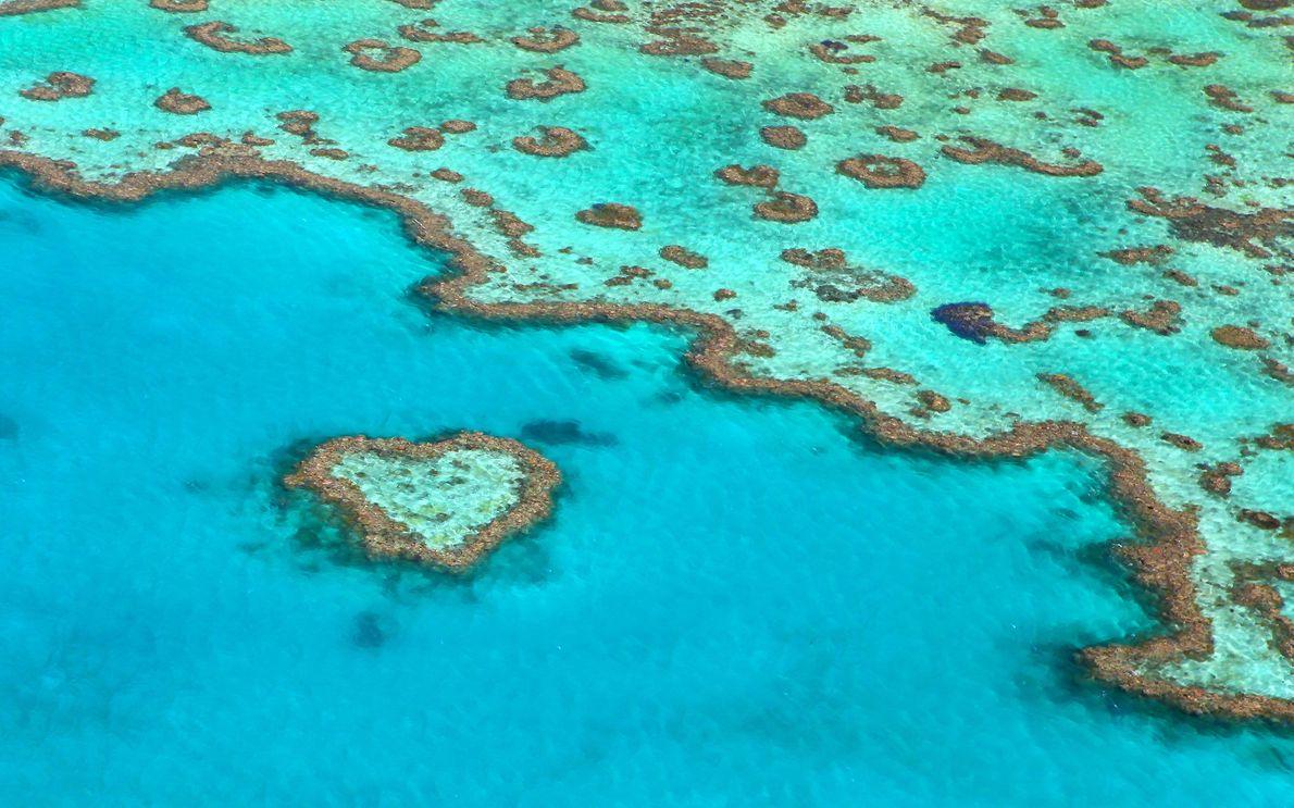 Arrecife Corazón, Gran Barrera de Coral, Australia