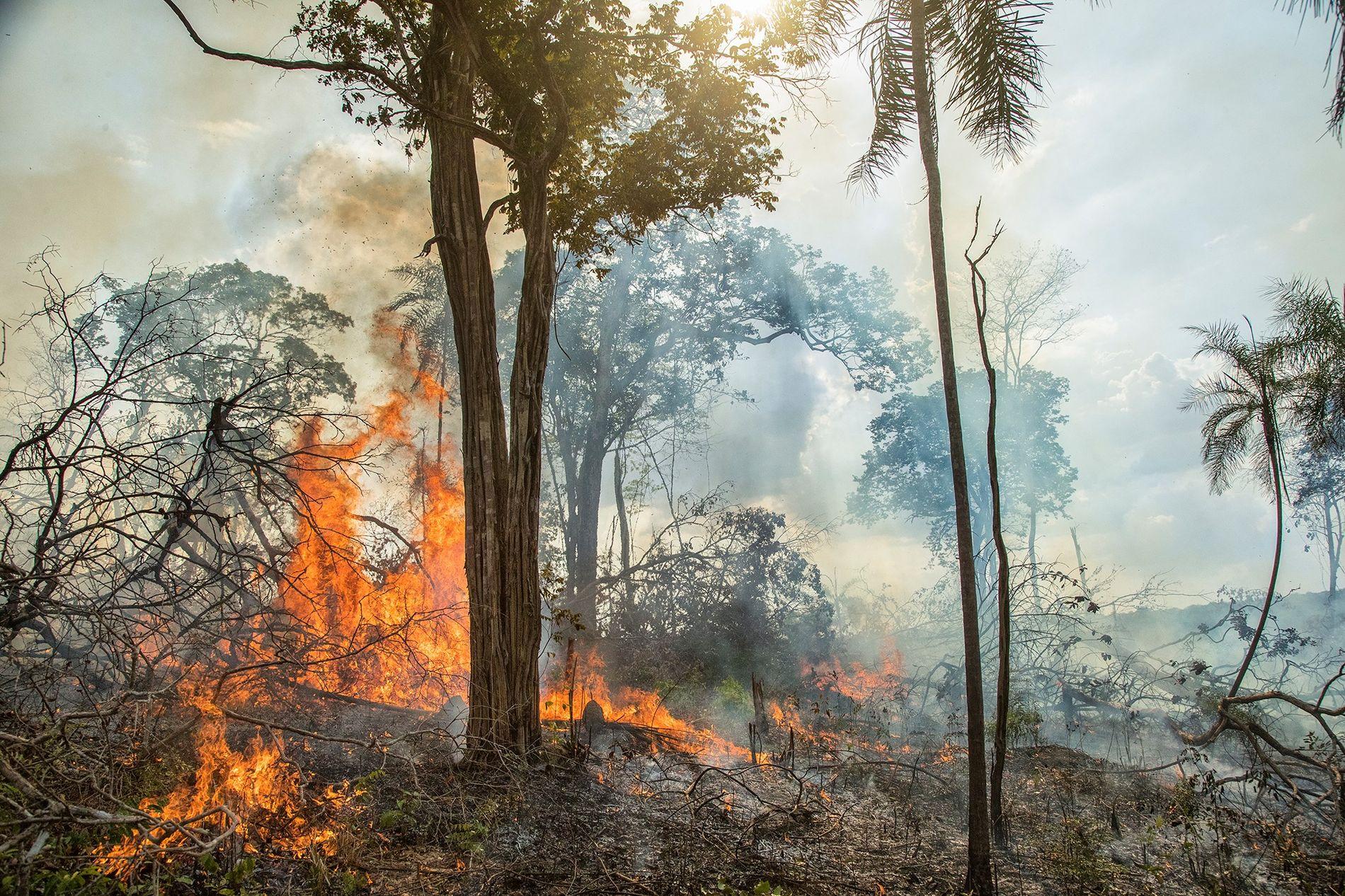 Un incendio arde en un campo de mandioca en la Amazonia brasileña. Algunos estudios determinan que las antiguas prácticas agrícolas desempeñan un papel en los incendios forestales modernos.