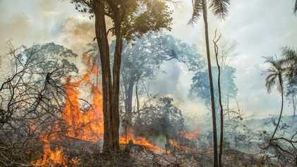 Los antiguos agricultores quemaron la Amazonia, pero los incendios modernos son muy diferentes