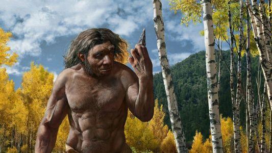 El cráneo del «hombre dragón» podría ser una nueva especie, lo que cambiaría el árbol genealógico ...