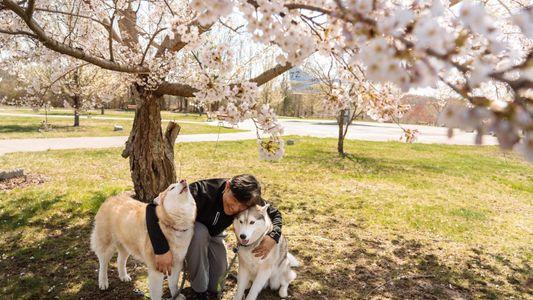 Tras un año de pandemia, los fotógrafos de Nat Geo enfocan sus objetivos hacia sus mascotas