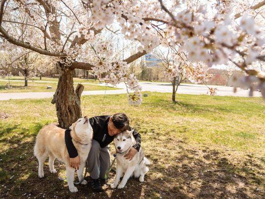 Imágenes de las mascotas de los fotógrafos de Nat Geo